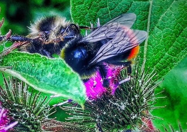 Bloemen en bijen